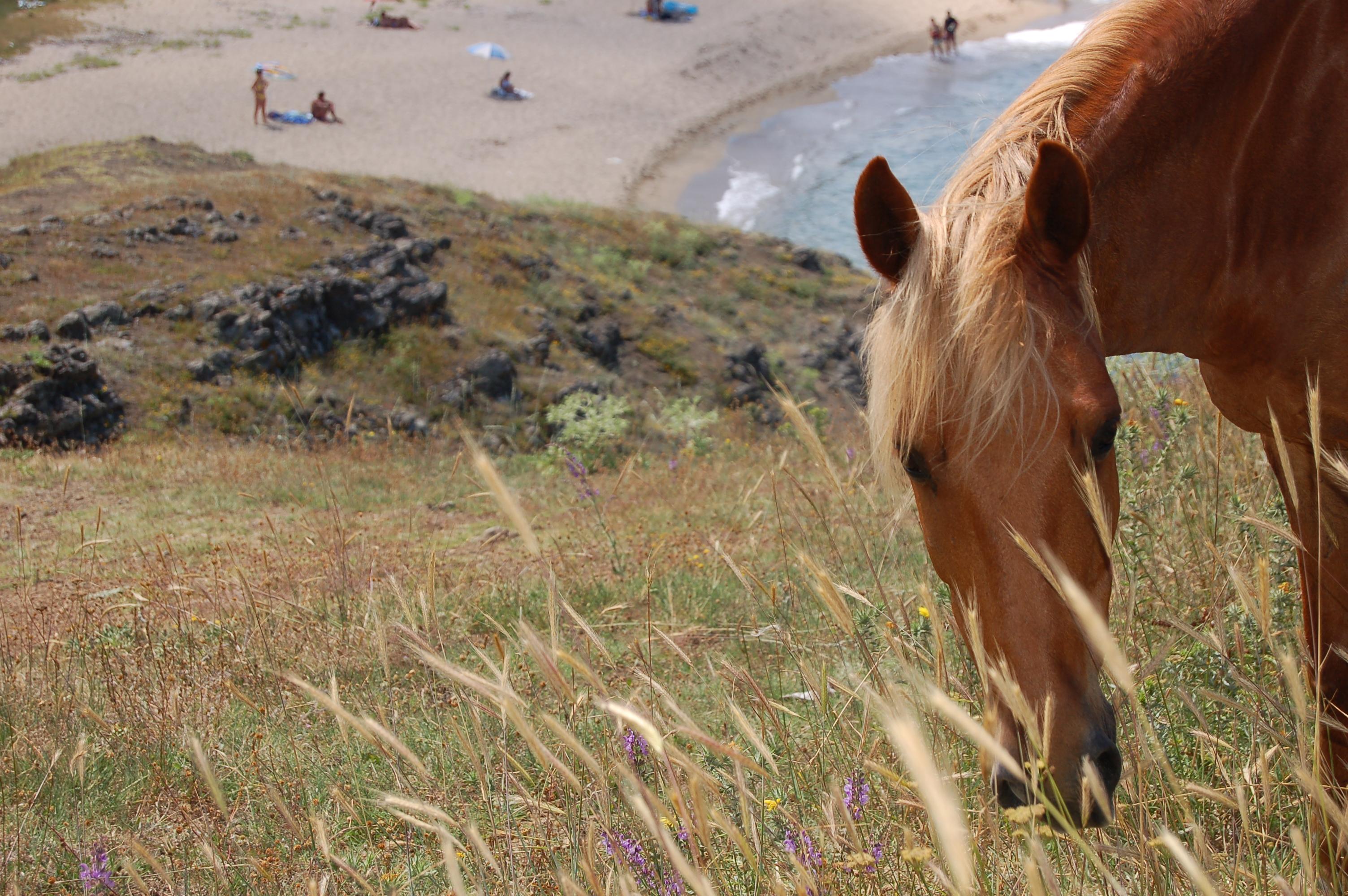 Пасящи коне над плажа на Велека