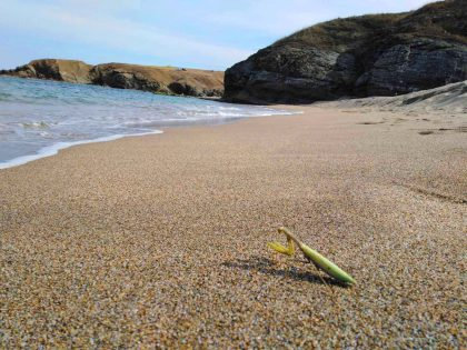 Богомолка на плаж